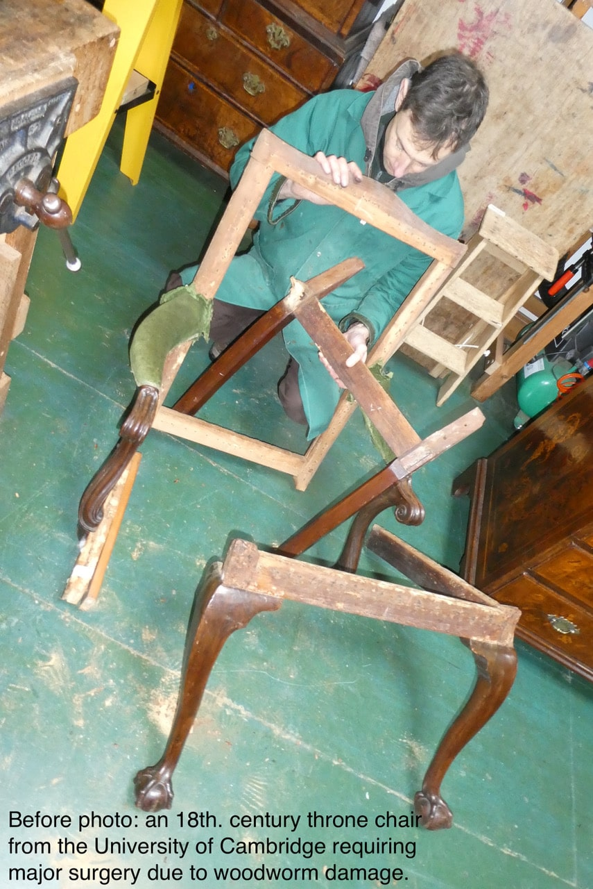 Before photo: an 18th century throne chair from University of Cambridge requiring major surgery due to woodworm damage..